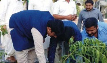 میئر کارپوریشن بہالپور نے شجر کاری کے حوالے سے پودا لگا دیا
