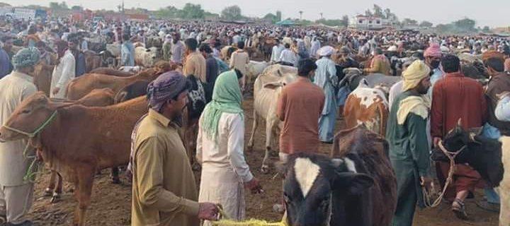 بہاولپور کے چار مقامات پر منڈی مویشیاں قائم